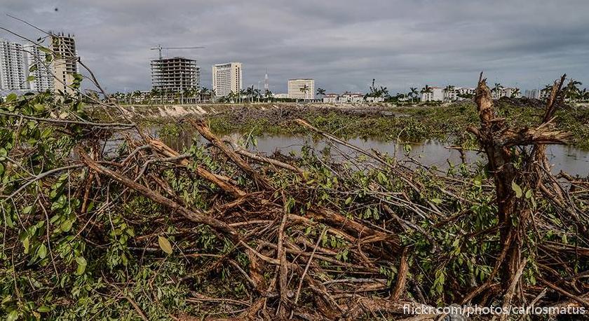 El fideicomiso que definirá el futuro del manglar Tajamar