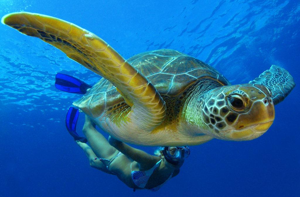 El santuario de la tortuga marina amenazado por empresa