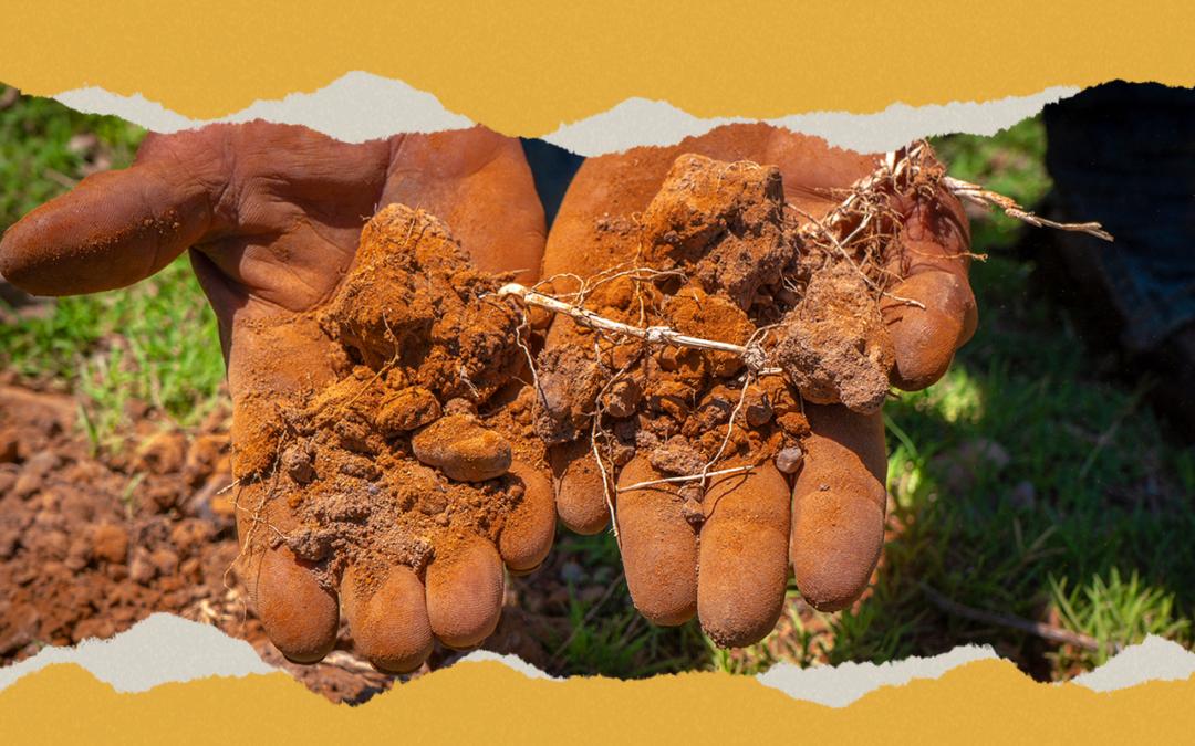 6 años de promesas incumplidas: #RíoSonora6