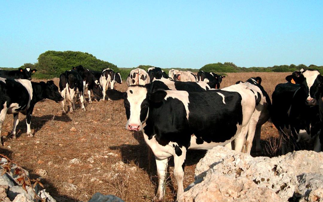 Las compras de leche del gobierno mexicano favorecen a multinacionales